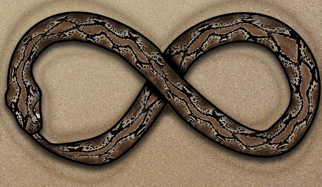 Le Cobra : Bhujangasana